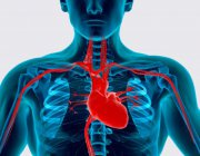 Истинные причины сердечно-сосудистых заболеваний